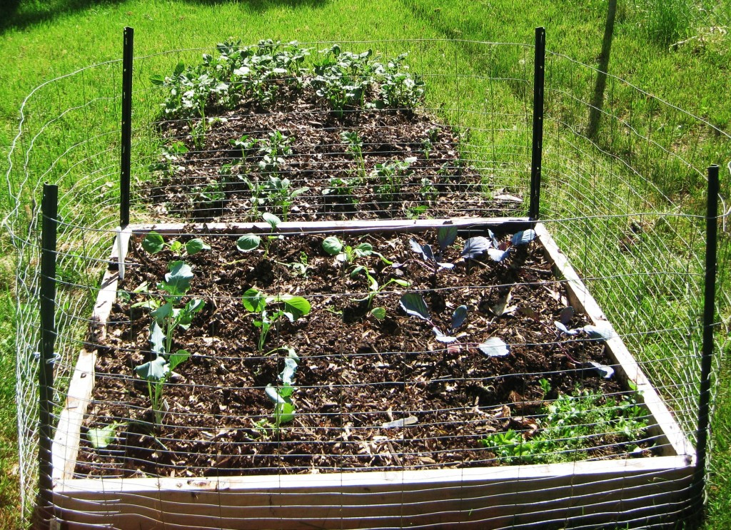 Raised garden bed is planted