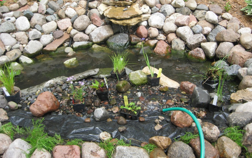 Refilling the pond, after pumping out the tainted water.