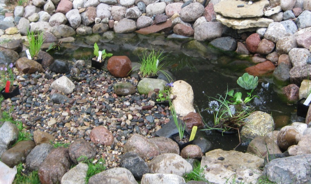 Aquatic plants will be repotted and arranged as they mature.