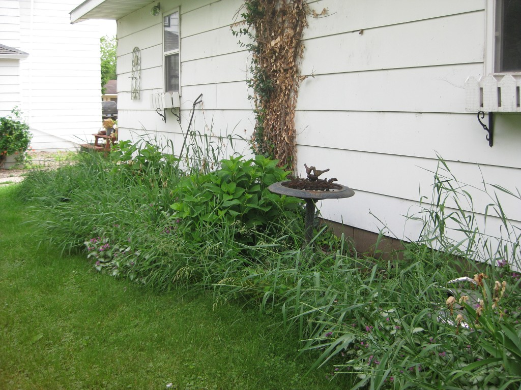 Neglected garden has not been tended for two years.