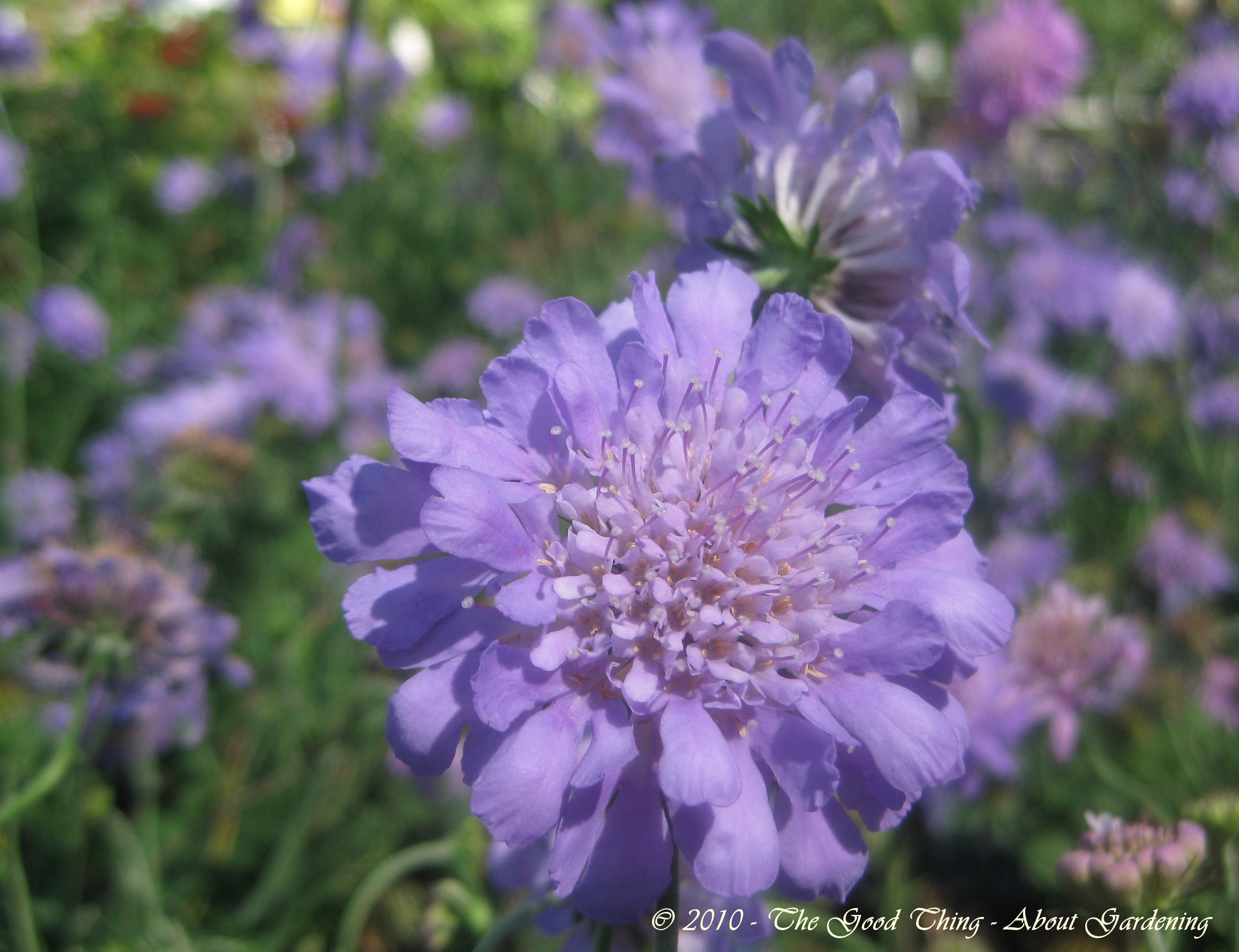 Perennial Butterfly Garden Plants The Good Thing About Gardening