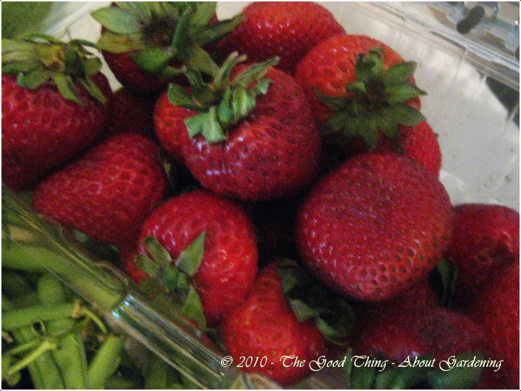 Strawberries Look and Smell Delicious