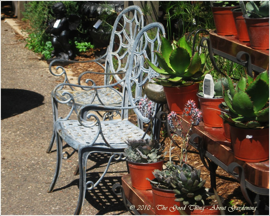 Succulents and Patio Chairs
