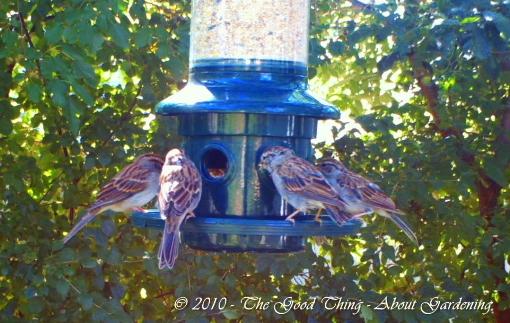 The feeder has reached maximum capacity for seating (and eating).
