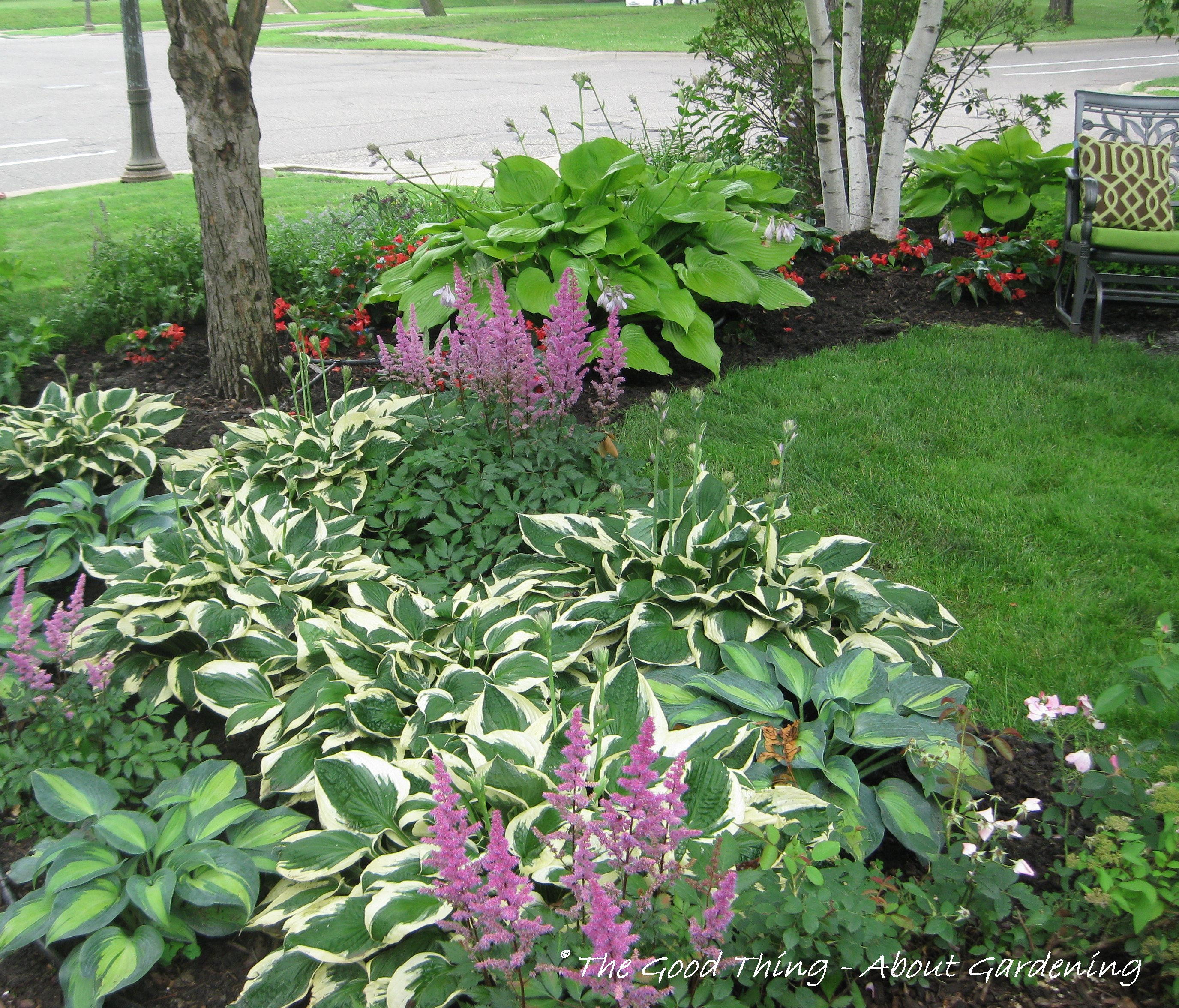 Veriegated Hostas ...