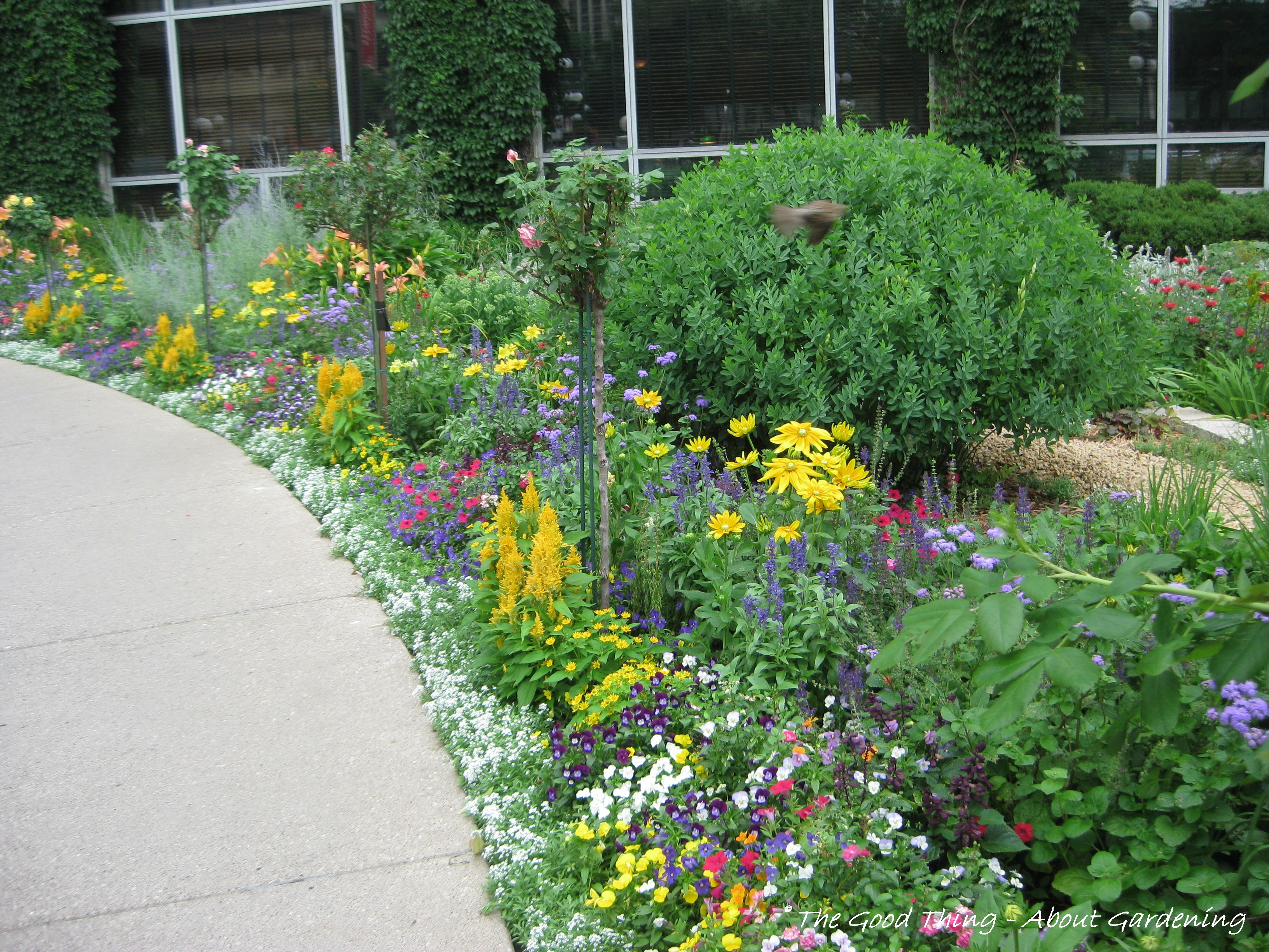Perennial Flower Garden Design Plans Viewing Gallery